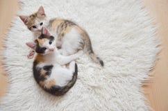 Gioco del gattino Fotografia Stock