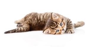 Gioco del gattino britannico Isolato su priorità bassa bianca Fotografia Stock Libera da Diritti