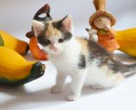 Gioco del gattino con la zucca, zucca Immagini Stock Libere da Diritti