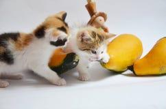 Gioco del gattino con la zucca, zucca Fotografia Stock