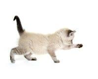 Gioco del gattino del bambino Fotografia Stock