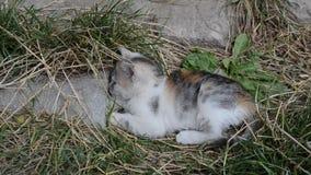 Gioco del gattino divertente archivi video