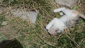Gioco del gattino divertente video d archivio