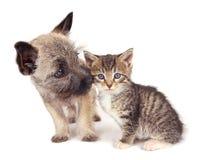 Gioco del gattino e del cucciolo. Fotografie Stock
