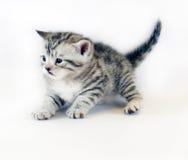 Gioco del gattino piccolo a strisce del gattino sveglio Fotografie Stock