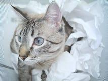 Gioco del gatto fotografia stock