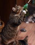 Gioco del gatto Immagine Stock Libera da Diritti
