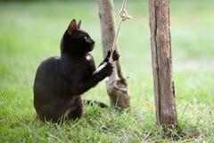 Gioco del gatto Fotografie Stock