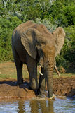 Gioco dell'elefante fotografie stock