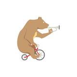Gioco dell'orso Immagine Stock Libera da Diritti
