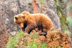 Gioco dell'orso e del bambino di Brown Fotografia Stock
