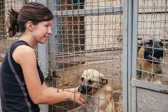 Gioco della donna con i cani senza tetto nel riparo di animali Immagine Stock
