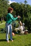 Gioco della donna con il volpe-terrier Fotografia Stock Libera da Diritti