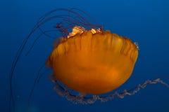 Gioco delle meduse fotografia stock libera da diritti