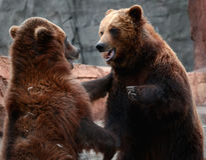Gioco dello zoo Fotografie Stock