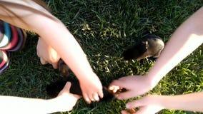 Gioco di bambini con tre poco coniglietto sull'erba stock footage