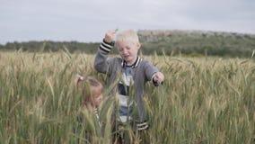 Gioco di bambini nel campo con le spighette del grano stock footage