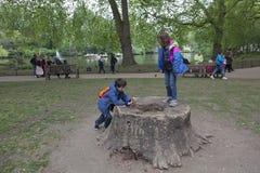 Gioco di bambini sul ceppo di albero nel parco del ` s di St James a Londra Fotografie Stock Libere da Diritti