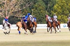 Gioco di Polo Players Ponies Blue White Immagini Stock Libere da Diritti