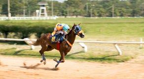 Gioco di sport di corsa di cavalli Immagini Stock