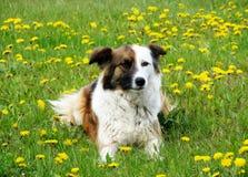Gioco domestico degli animali Immagine Stock Libera da Diritti
