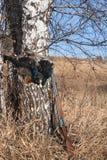 Gioco e fagiano di monte della pistola Fotografia Stock Libera da Diritti