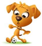 Gioco giallo del cane di divertimento con pallone da calcio Fotografia Stock