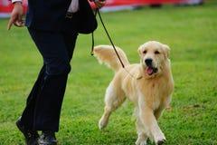 Gioco matrice con il suo cane fotografia stock libera da diritti