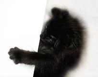 Gioco nero del gattino Fotografie Stock Libere da Diritti