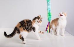 Gioco sveglio di due un piccolo gattini Fotografie Stock Libere da Diritti