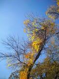 Gioia autunnale dei rami e delle foglie durante il sole Fotografia Stock Libera da Diritti