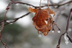 Gioielli di inverno Immagine Stock Libera da Diritti