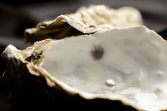 Gioielli, perla in un'ostrica Fotografia Stock