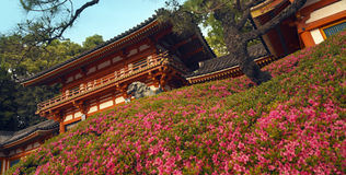 gion日本maruyama公园 图库摄影