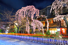 Gion city with sakura tree Stock Photography