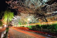 Gion con los trss de Sakura Fotos de archivo libres de regalías