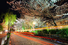 Gion with sakura trss Royalty Free Stock Photos