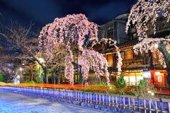Gions-Stadt mit Kirschblüte-Baum Stockfotografie