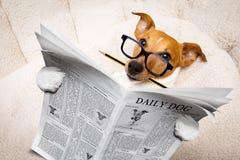Giornale della lettura del cane Fotografie Stock