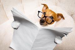Giornale della lettura del cane Immagini Stock