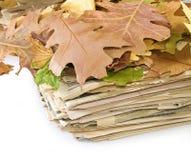 Risultati immagini per foglie autunno giornale