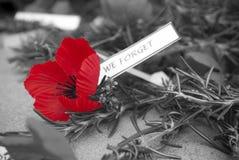 Giornata della memoria rossa di giorno del anzac del papavero Immagine Stock