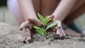 Giornata per la Terra dell'ambiente nelle mani degli alberi che crescente le piantine Bokeh si inverdisce l'albero femminile dell stock footage