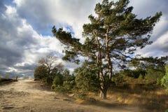 Giorni tempestosi, ` s del lotto di vento Fotografia Stock