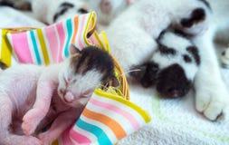3 giorni vecchio Kitty in un canestro Fotografia Stock