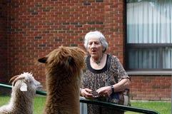 Giorno al giardino zoologico petting per gli anziani Fotografie Stock