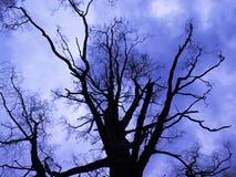 Giorno blu scuro sotto l'albero Fotografia Stock