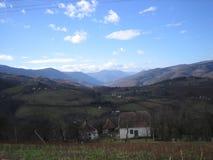 Giorno blu su Cesalpina fotografia stock