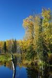 Giorno calmo di caduta nell'Alaska Fotografie Stock Libere da Diritti