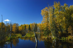 Giorno calmo di caduta nell'Alaska Immagini Stock Libere da Diritti